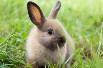 Links Vets in Haddington - Health Care Plan for rabbits