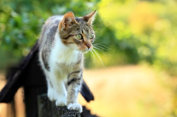 Links Vets in Haddington - Health Care Plan for outdoor cats