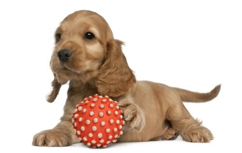 Puppy Package - Sandhole Vets Kent - £67.50