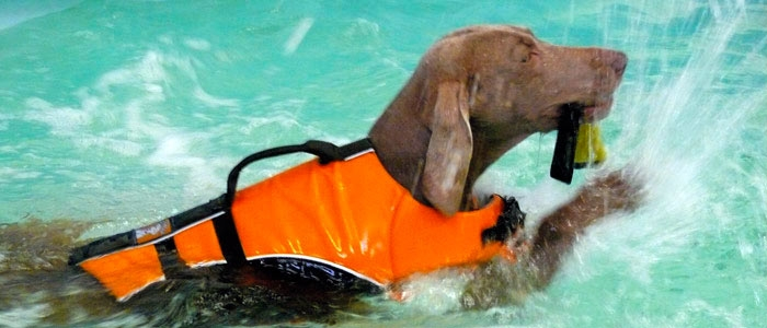 Kingston Veterinary Group - Bluewaters Canine Hydrotherapy