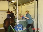 The Horse Clinic at Blackmore - Reproductive and AI Services