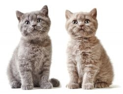 Kitten Package - Sandhole Vets Kent - £72.50
